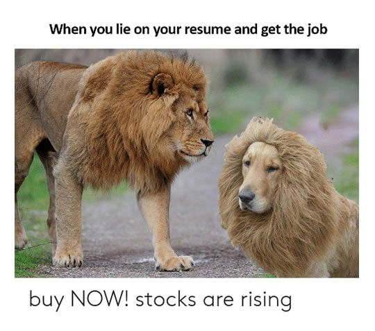 1 Buy Now Stocks Are Rising 2 A Cat Among The Rabbits 3 When You Lied About Your Qualifications And Experience Funny Animal Memes Funny Animals Animal Memes
