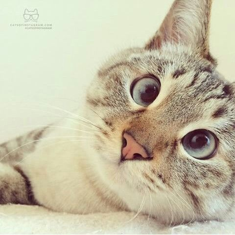 Adorable♡♡a heart-melting cat