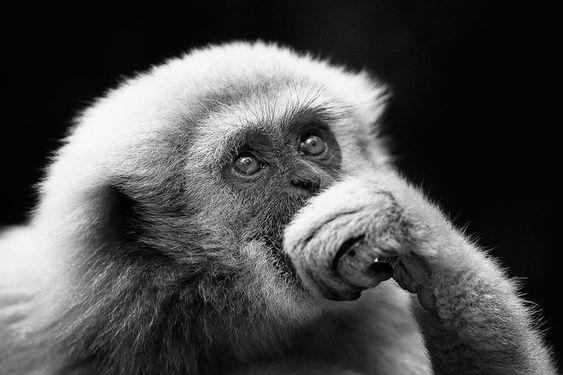 Праздник Mая День ПОБЕДЫ Разные разности Pinterest - Captivating black and white animal portraits by antti viitala