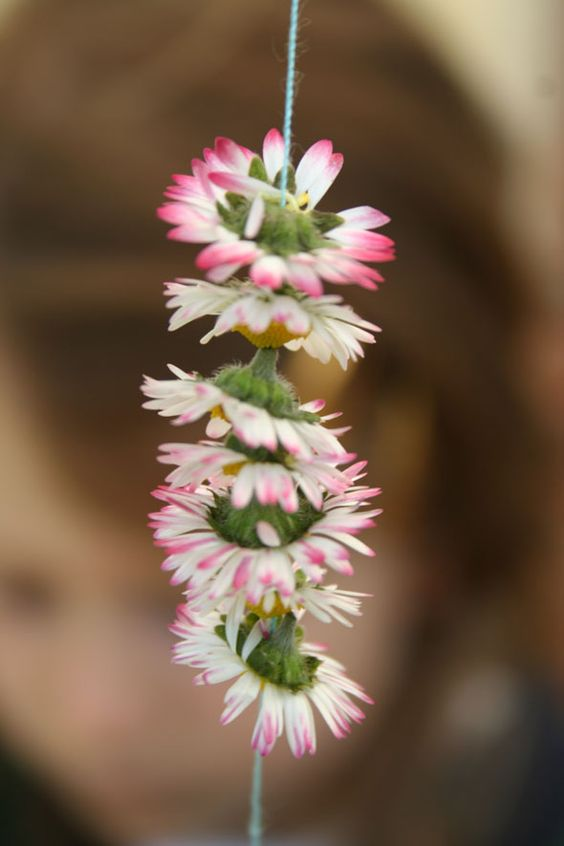 collar de margaritas.daisies necklace