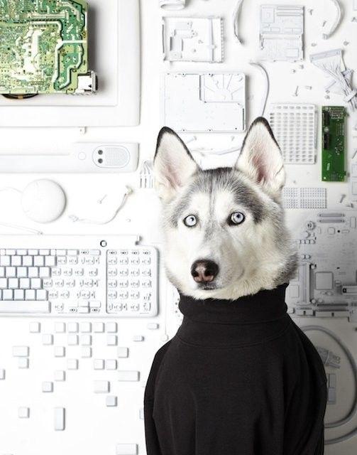 Steve Dog