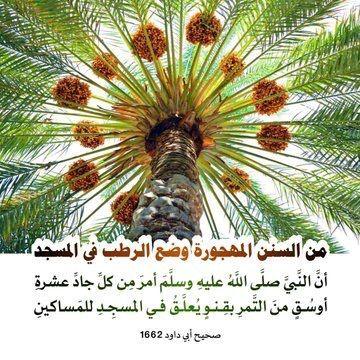 Pin By Abdulrahman Alghamdi On الد ين الق ي م Plants Islam