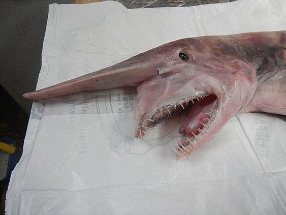 10 Horribles (Y Reales) Criaturas Marinas Que La Gente A Descubierto Le Darán Escalofríos