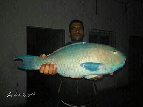 اصطياد اغرب سمكة في بحر غزة Fish Pet Pets Animals