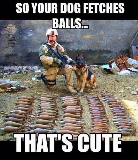 Top 31 Police Dog Memes Military Dogs Dog Memes Funny Dog Memes