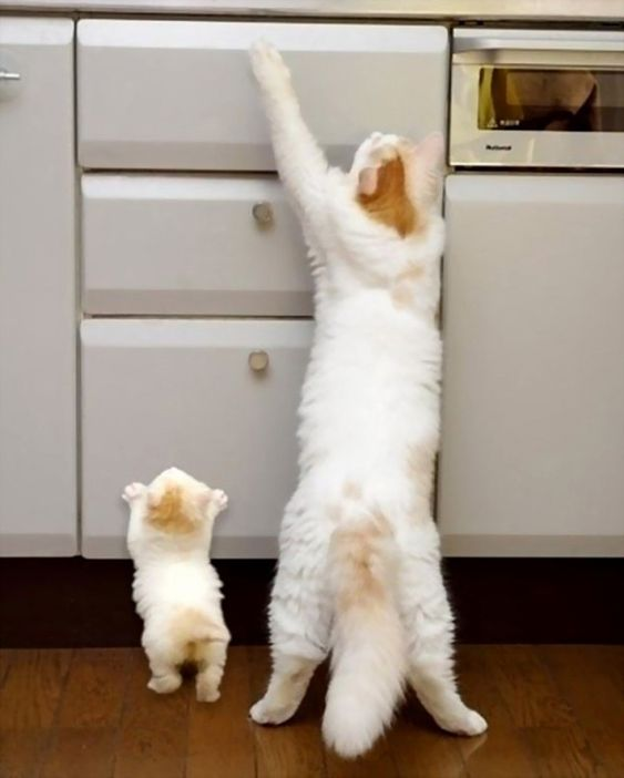Note to kitten, your mum isn't getting anywhere with that paw. Adorable Photos of Animals and Their Mini-Me's - My Modern Metropolis
