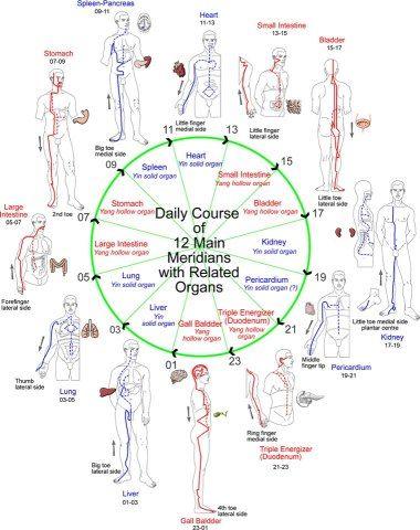 Meridians, clock Repinned http://www.medischeqigong.com/ http://www.academ.nl/ #qigong #meridians