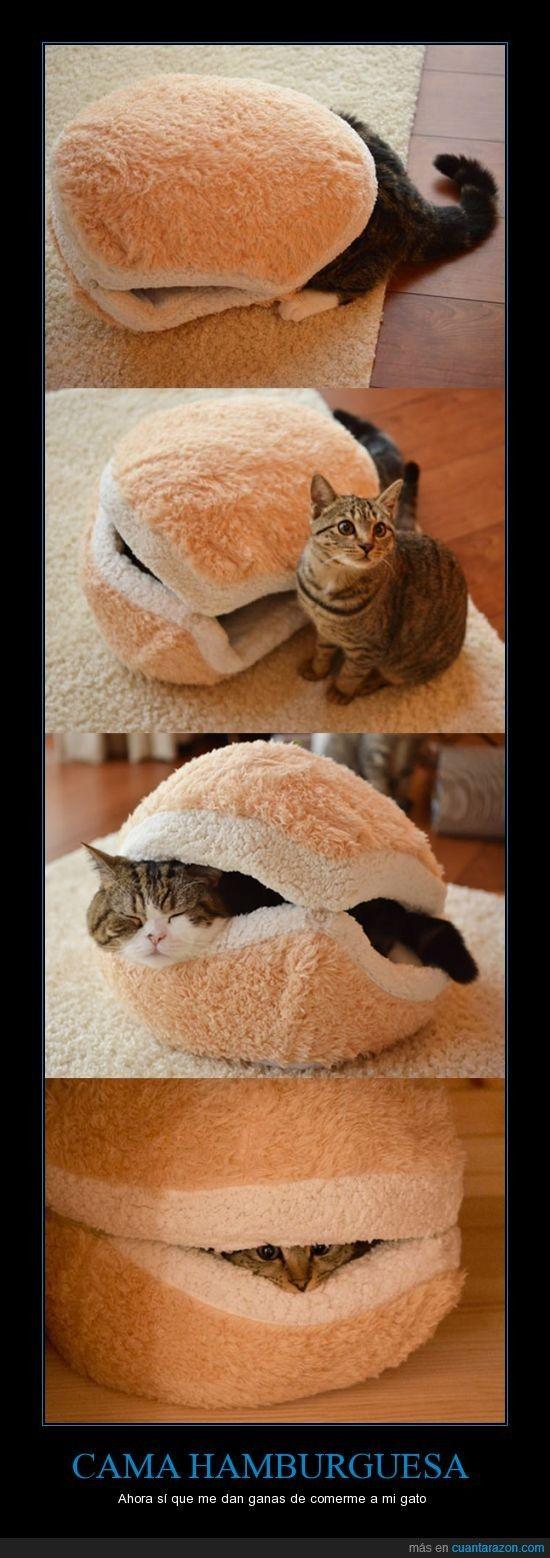 Mirad qué cómodo el gato en su camita hamburguesa - Ahora sí que me dan ganas de comerme a mi gato