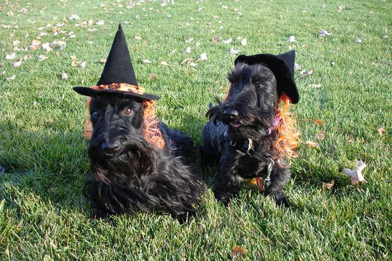 Halloween Scottie Dogs.