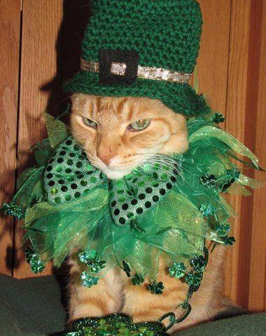 St. Patrick's Day-Cat dressed as leprechaun #stpatricksdaycostume
