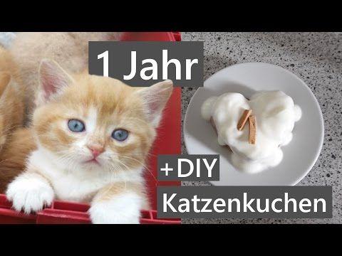 Kindergeburtstag Kuchen Katze Video Charlie Hat Geburtstag Diy