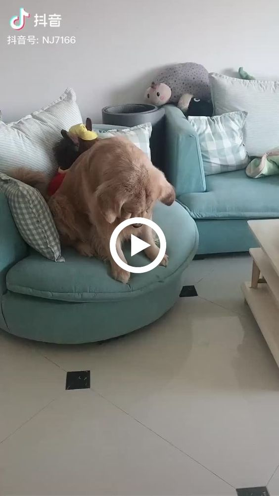cachorrinho esta bravo