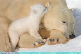 Are you listening mommy? #polar bear #baby polar bear #photography