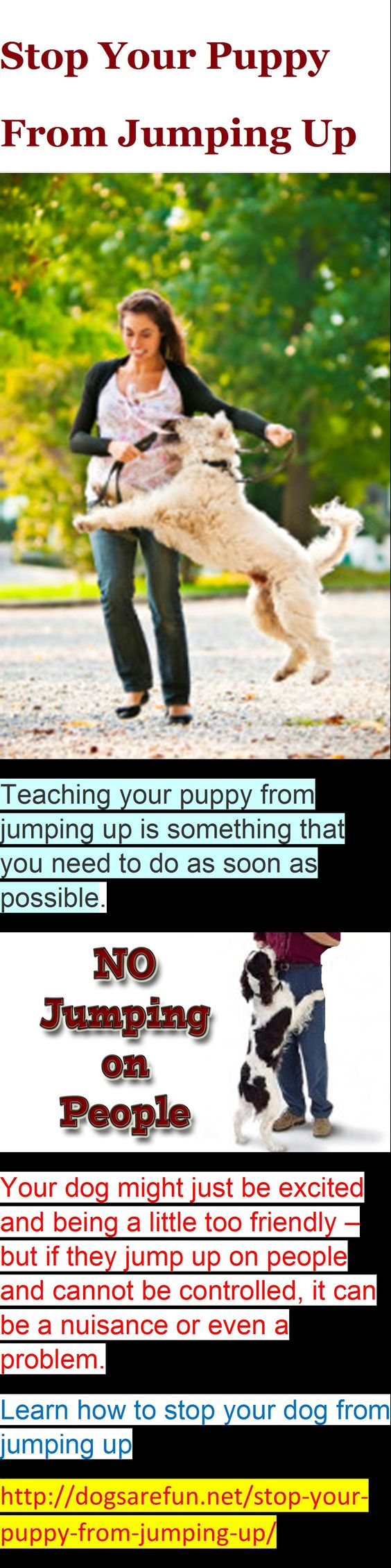 Puppy training jumping