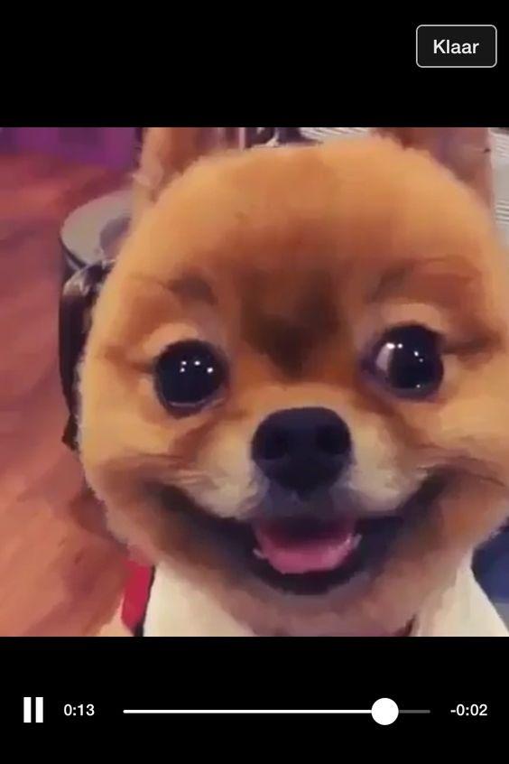 Love Dogsxx Schattige Hondjes Pinterest Liefde