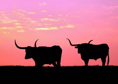 pink texas sky