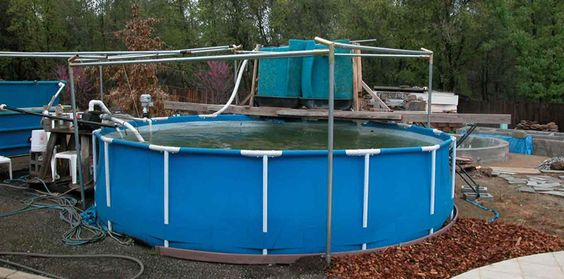 Koi ponds intex above ground pools and ground pools on for Koi show pools