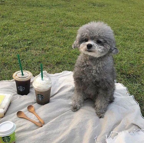 Pin Von Miriam Auf Doggos Babytiere Labradoodle Welpen Hunde
