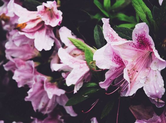 RAINY FLOWER PLANT 02 #photography #canon #floral #spring #rain #berkeley #nature #vsco #lightroom #cliche #basickkkkk by cephalopodimite