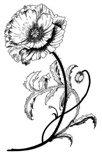 Poppy Line Drawing Tattoo : Drawings google and poppies on pinterest