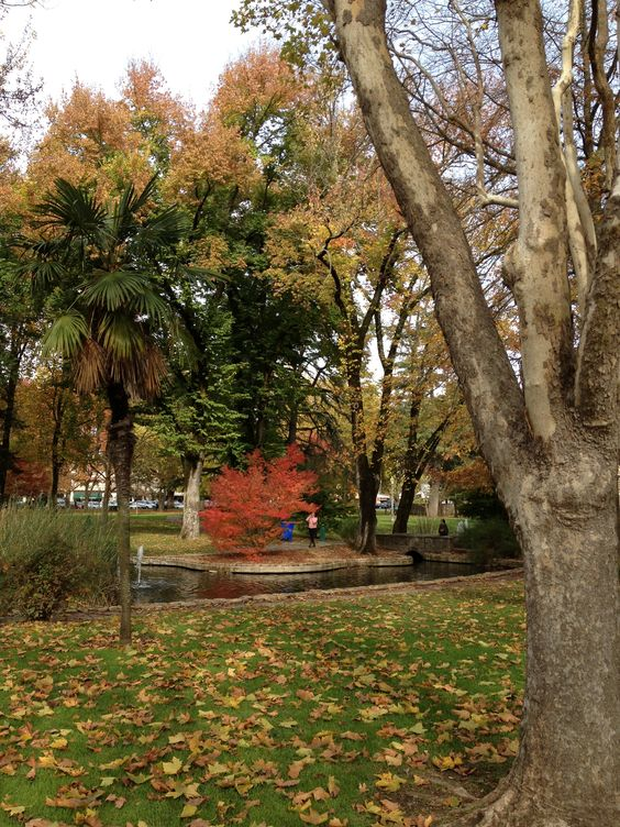 Fall day on the historic Sonoma Plaza.