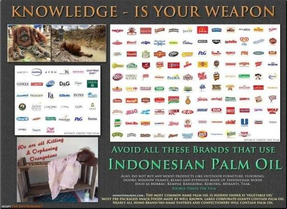 Brands guilty of using Indonesian palm oil....help the orangs, shop with care  pic.twitter.com/vbWf2CkJ