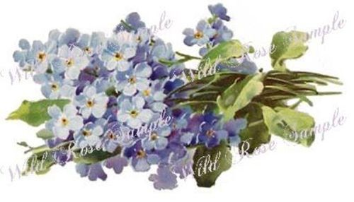 XL-BeauTiFuL-BLuE-ForGeT-Me-NoTs-SHaBbY-WaTerSLiDe-DeCAL-s-FuRniTuRe-SiZe