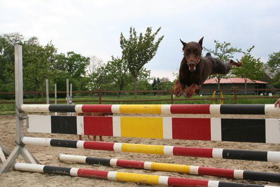 Sporty Dobi