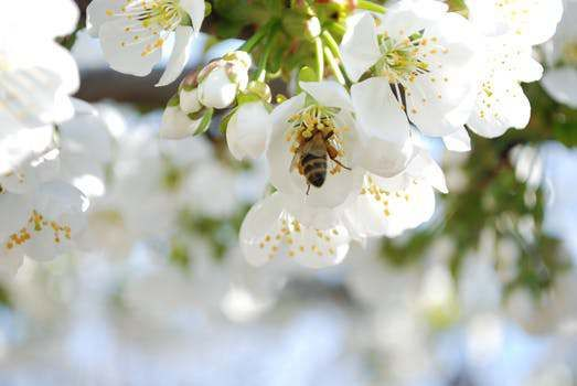 Lessons From Bees In God S Garden Sarah Geringer Flora Flowers Bee Different Bees