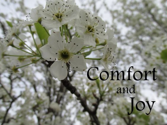 See  the Beauty in the Ordinary: Comfort and Joy