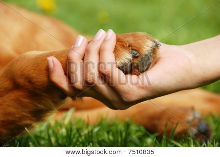 Yellow Dog Paw And Human Hand Shaking Friendship Poster Dog
