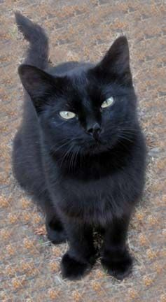 Sweet face.Love the way he`s looking into the camera....it certainly must be somebody he trusts and loves!: