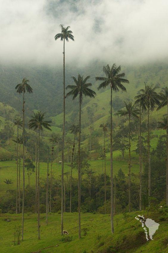 Salento et la vallée de Cocora en Colombie, miniscule et géant