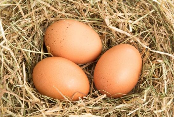 Why Are Eggs Egg-Shaped? | Mental Floss