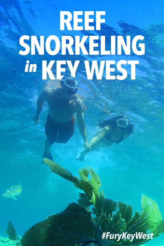 How much do you know about Key West's coral reef? Bet you didn't know they're home to over 500 species of tropical fish! 🐬 🐠 🐟