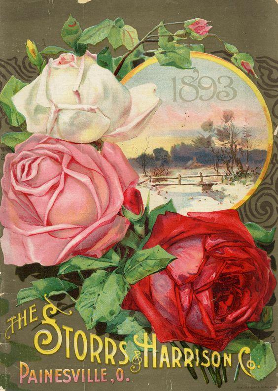 Vintage seed catalog: