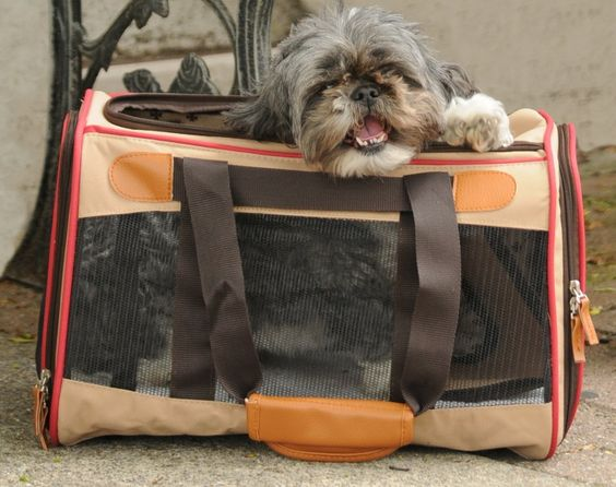 For flight back with my puppy? Amazon.com: Sherpa 97005 Element Pet Carrier : Soft Sided Pet Carriers : Pet Supplies | Seatbelt/luggage strap; mesh panels for ventilation; top and side entry; side pocket | Spring wire frame easily conforms to airlines' under seat dimensions | pets up to 16 pounds ($34.82 Prime)