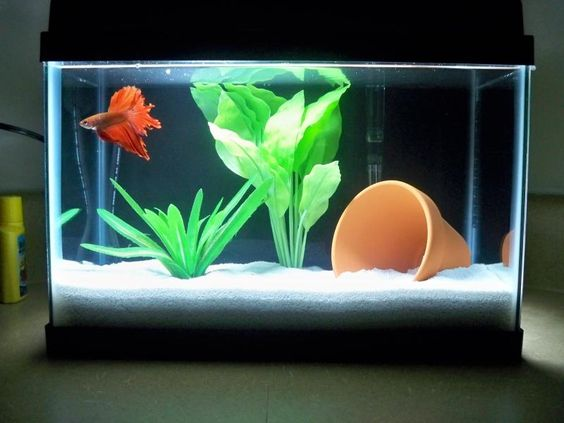 A 2 5 gallon tank with a beautiful betta this is a small for 2 gallon fish tank