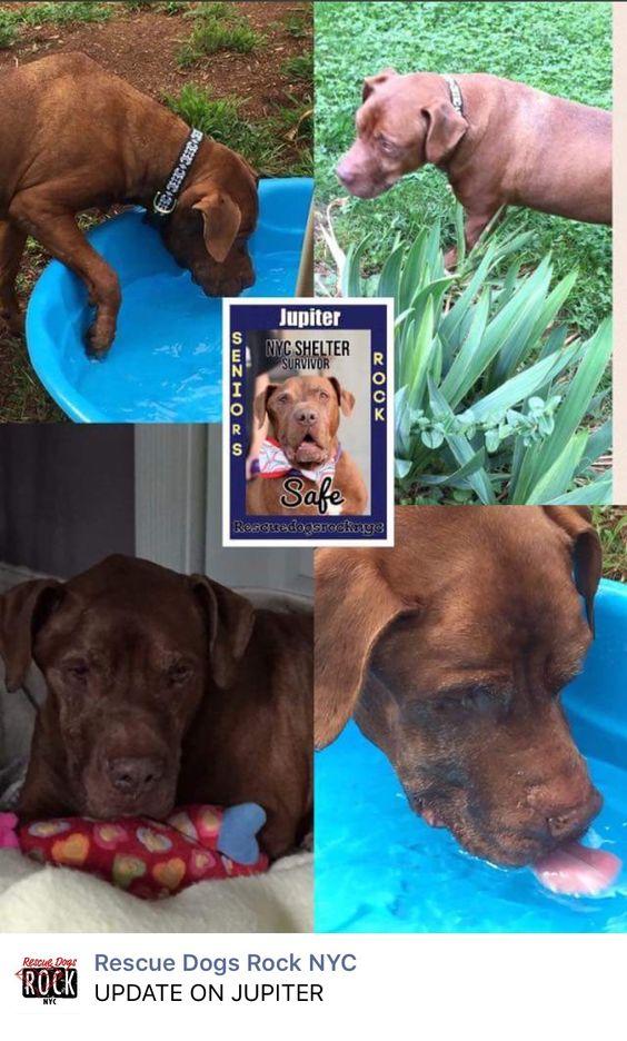 7 11 16 Jupiter Freeeeeedom Ij Https M Facebook Com Story Php Story Fbid 1123719674375454 Substory Index 0 Id 56666 Rescue Rescue Dogs Dog Rocks