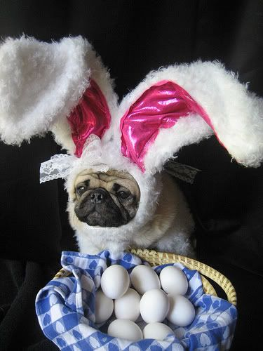 21 Adorable Animals Dressed Up For Easter | Her Campus