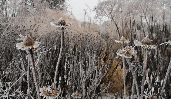 winter garden: