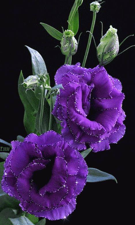 GIFS HERMOSOS: virágok encotradsen la web