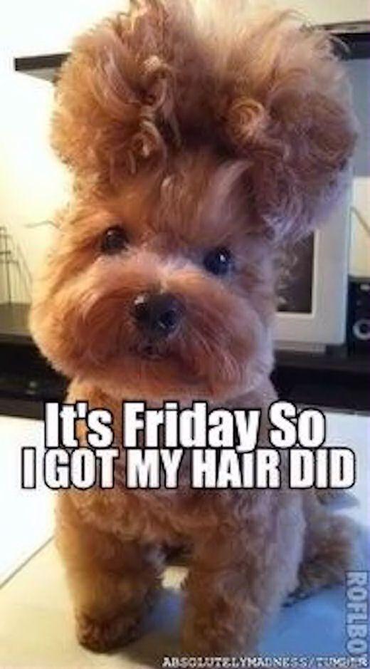 Its Friday So I Got My Hair Did friday happy friday tgif friday quotes friday…