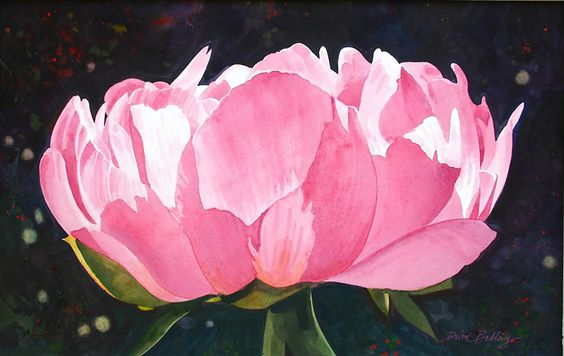 peonie red.    David Belling