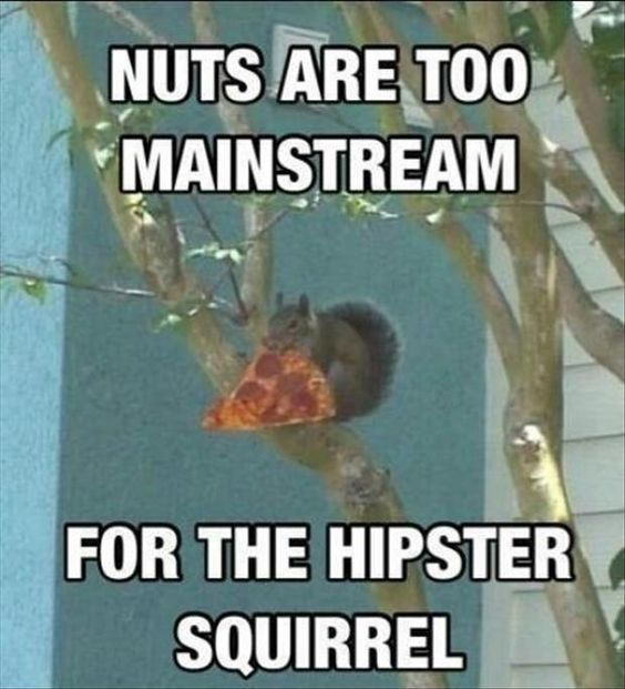 hipster squirrel