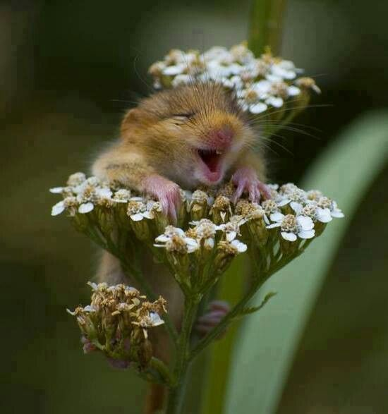 Mouse on flower