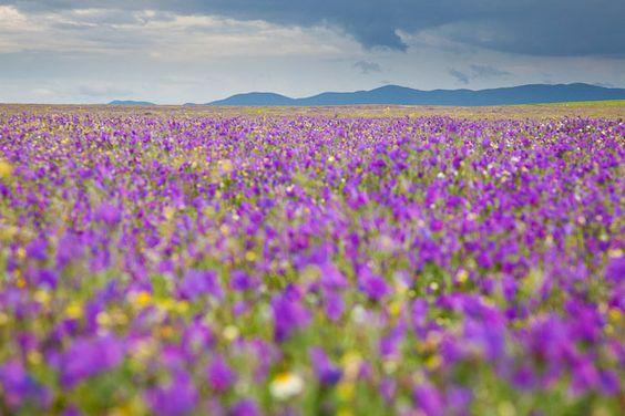 flower meadow - Google Search