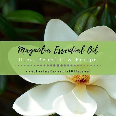 Magnolia Essential Oil Uses Benefits Recipes Eo Spotlight Essential Oil Uses Essential Oil Blends Recipes Essential Oil Treatments