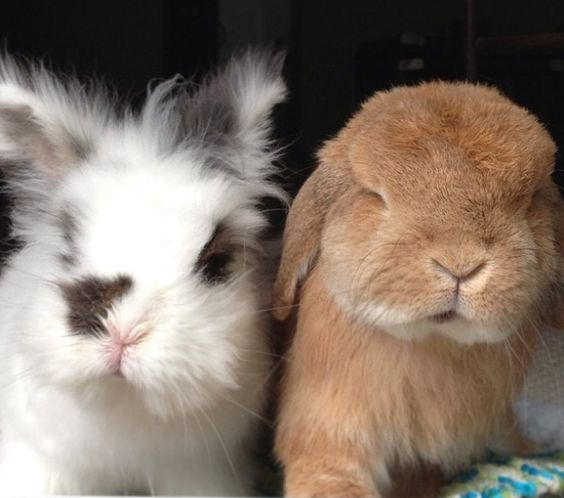 Let's Talk About The Cutest Bunny Brothers On Instagram. Multiple Adorable Pictures you need to see!