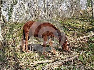 Brown foal in the forest glade among the trees